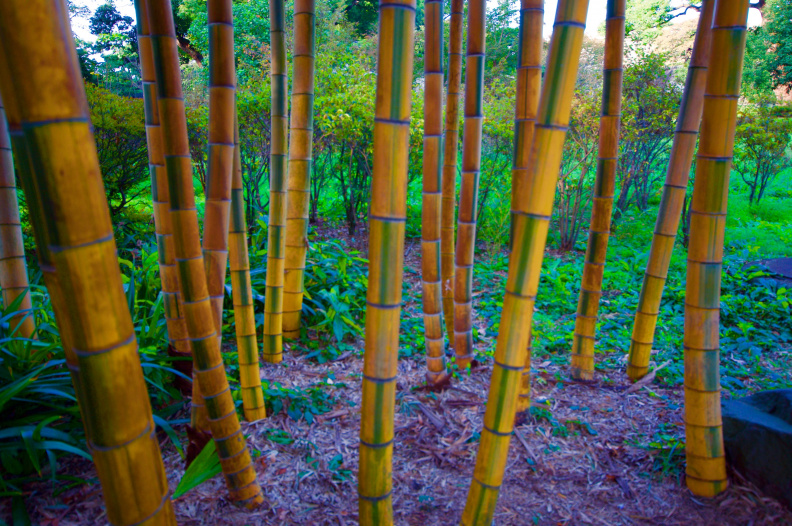 Bamboo, Imperial Palace Gardens, Tokyo
